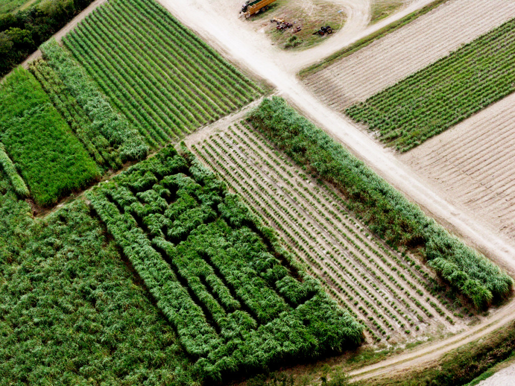 Anne Katrine Senstad, The Sugarcane Labyrinth, aerial view, a 1.5 acre agricultural land art piece in Theriot, Louisiana. Image courtesy of the artist, 2014.